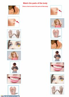Interactive worksheet Match the parts of the body