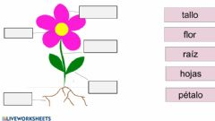 Interactive worksheet Partes de la flor