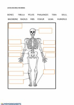 Interactive worksheet Bones-skelleton