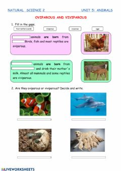 Interactive worksheet Oviparous and viviparous