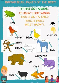 Interactive worksheet Brown bear parts of the body