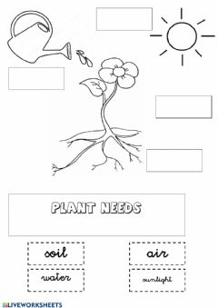 Interactive worksheet The needs of a plant