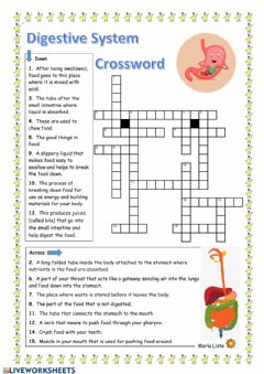 Interactive worksheet Digestive System Crossword