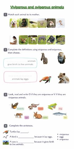 Interactive worksheet Viviparous and oviparous animals