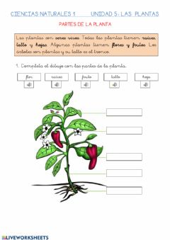Interactive worksheet Plantas