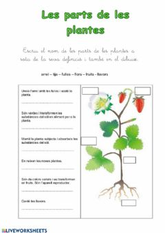 Interactive worksheet Les parts de les plantes
