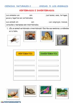Interactive worksheet Vertebrados e invertebrados