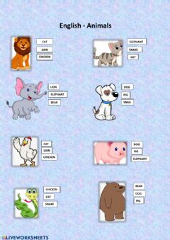 Ficha interactiva Animals Test