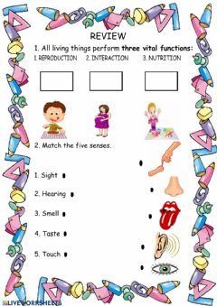 Interactive worksheet Senses and three vital functions