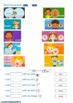 Interactive worksheet My senses