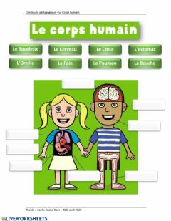 Interactive worksheet Le Corps Humain Ver 2