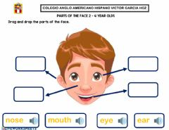 Ficha interactiva Parts of the face 2 - 4 year olds