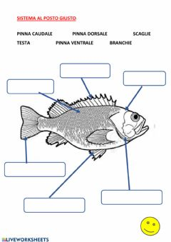 Interactive worksheet Le parti del pesce