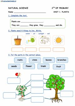 Ficha interactiva Unit 1. Plants (2º E.P)
