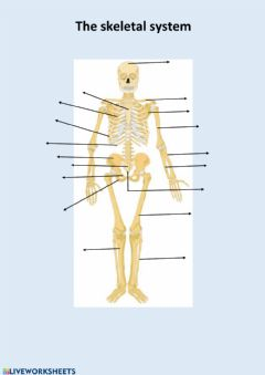 Ficha interactiva The skeletal system