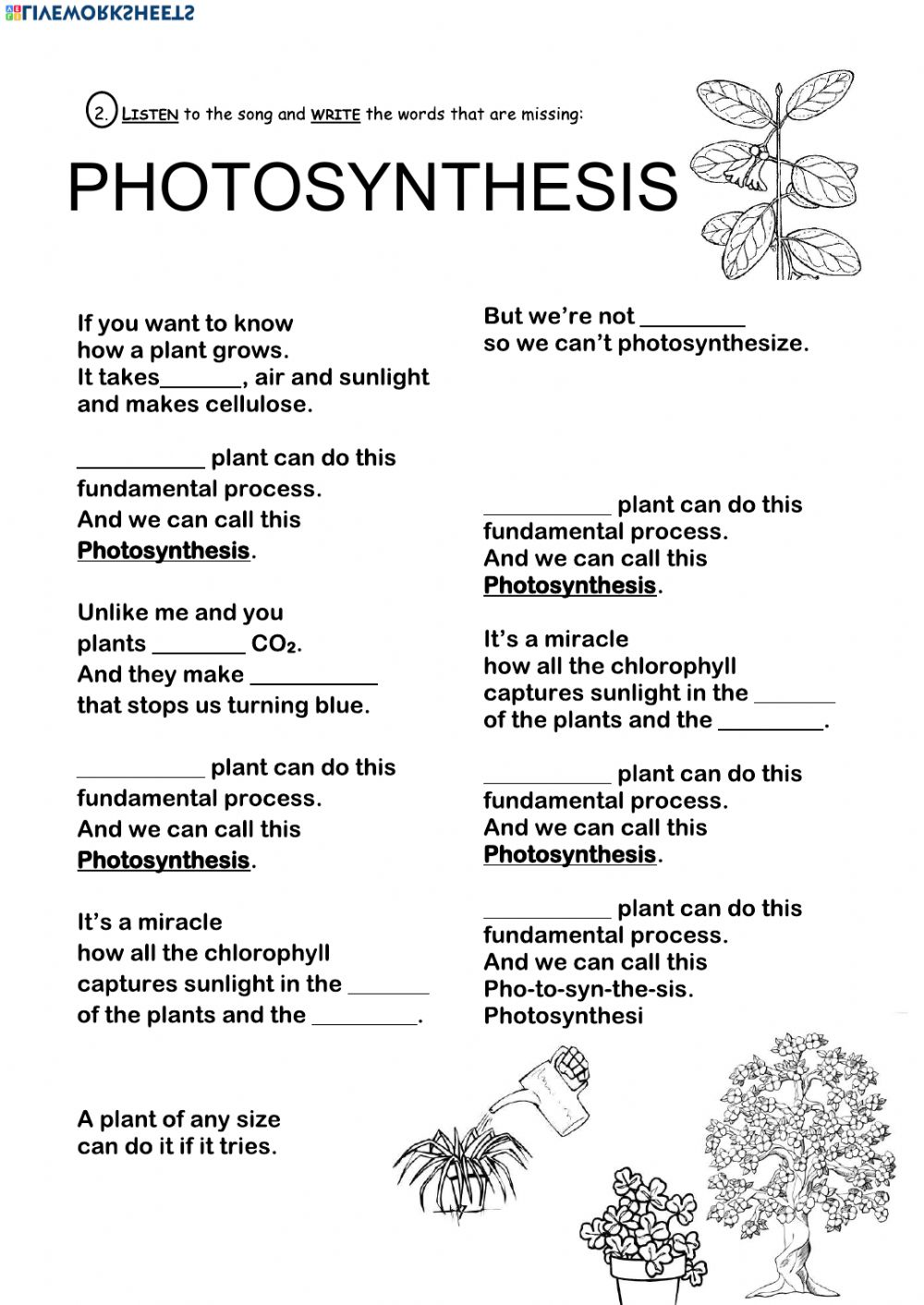 Photosynthesis exercise for grade 4