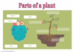 Interactive worksheet Parts of a plant 01