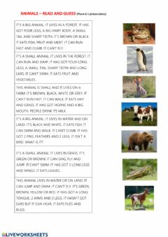 Interactive worksheet Animals - reading comprehension