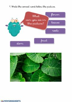 Interactive worksheet Parts of a plant 02