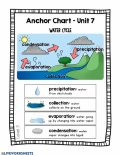 Interactive worksheet Water Cycle - Day 1