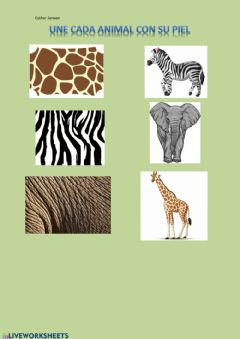 Interactive worksheet Une cada animal con su piel