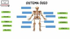 Interactive worksheet Sistema óseo