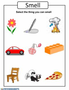 Interactive worksheet Pract 4 five senses