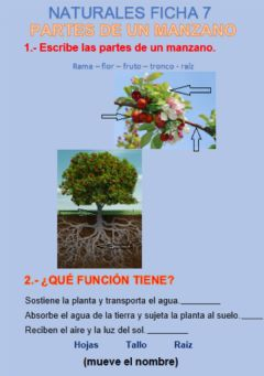 Interactive worksheet Partes de un arbol