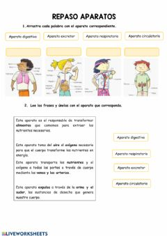 Interactive worksheet Aparatos y sistemas (repaso)