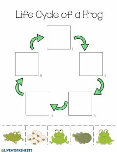 Ficha interactiva Life Cycle of a Frog