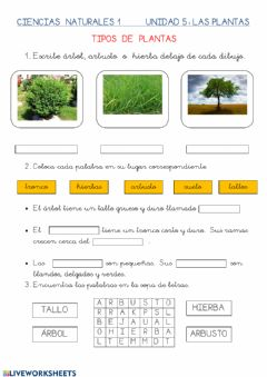Interactive worksheet Tipos de plantas