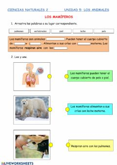 Interactive worksheet Mamíferos