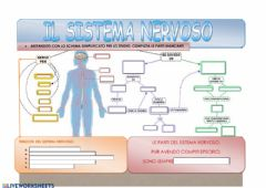 Interactive worksheet Il sistema nervoso