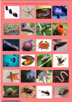 Interactive worksheet Invertebrados 5