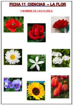 Interactive worksheet Las flores