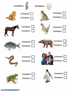 Interactive worksheet Oviparous and Viviparous Animals