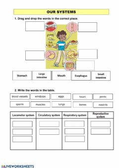 Interactive worksheet Our systems 3º