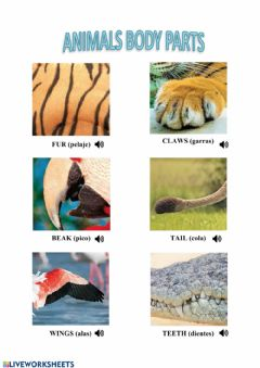 Interactive worksheet Vocabulary parts of the body (animals)