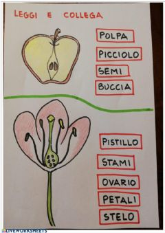 Interactive worksheet Fiore e frutto