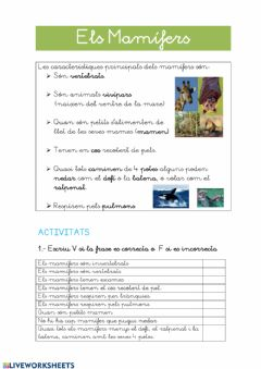Interactive worksheet Els mamifers