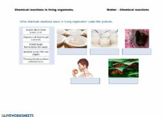 Interactive worksheet Chemical reactions