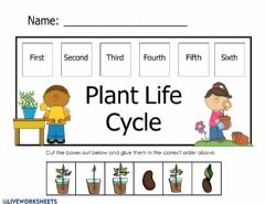 Interactive worksheet Plant Life Cycle