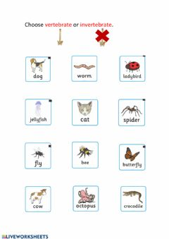Interactive worksheet Vertebrate or Invertebrate