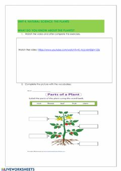 Interactive worksheet The plants