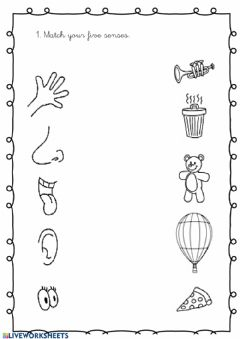 Interactive worksheet My 5 senses