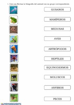 Interactive worksheet Grupos de animales