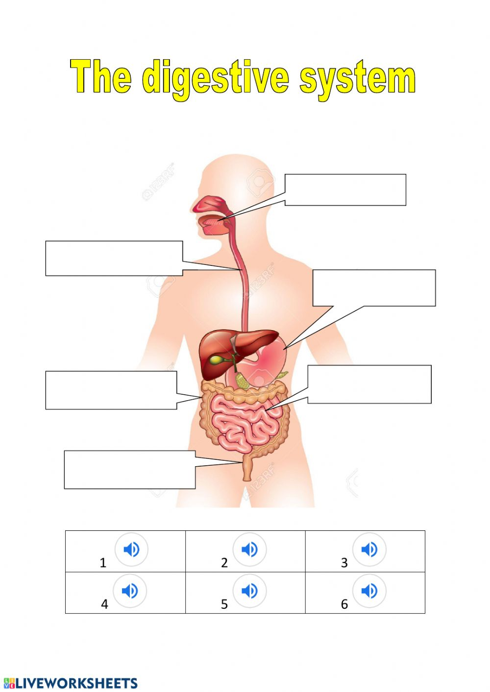 The Digestive System Exercise