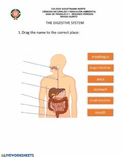 Interactive worksheet The Digestive System