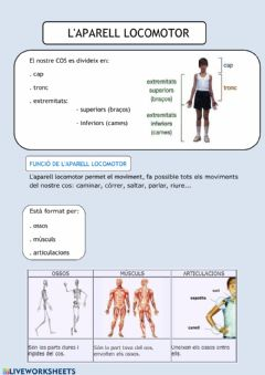 Interactive worksheet Aparell locomotor