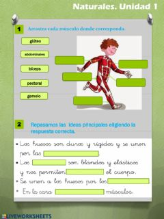 Interactive worksheet Los músculos